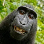 Profile picture of Steve Cornes